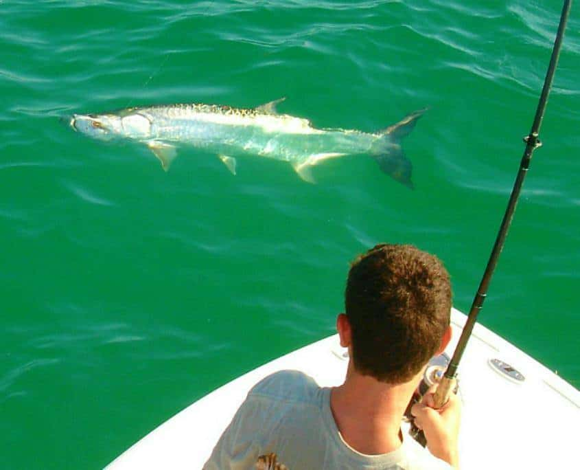 anna maria fishing charters tarpon fishing